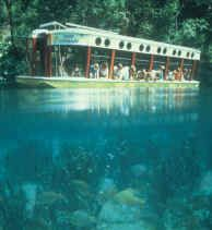 Silver Springs - Glass Bottom boats offer passengers an unparalleled view of underwater life in the 99.8% pure waters of the Silver River.