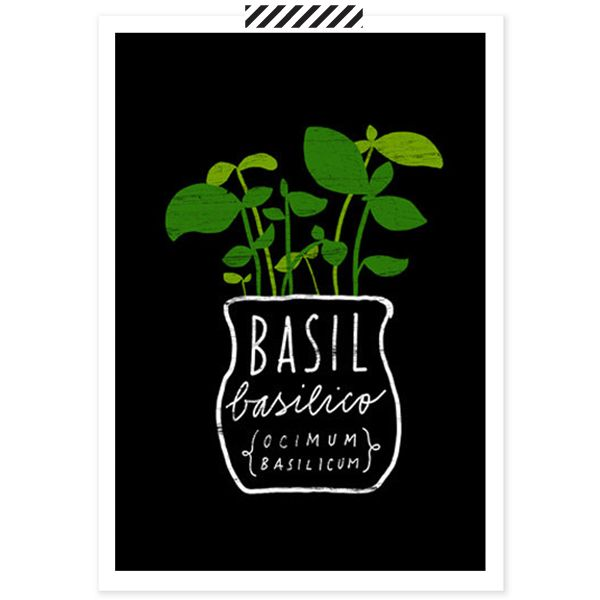 Basil Herb Poster – babasouk.ca : Yes, your kitchen deserves some art and your life some color! With her simple, colorful lines, Anek reflects the feeling of good food & living. You know us...