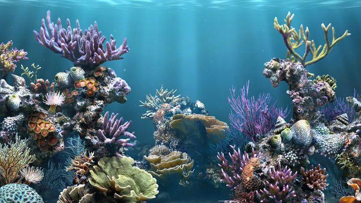 se encuentran algunas manchas de zostera marina, fanerógama marina asociada con los peces góbidos, erizos, estrellas de mar, caballitos de mar y moluscos.