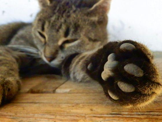 #cute #cat #cutecat #paw #sleep