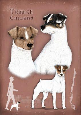Carol Cartagena Urra - Terrier Chileno