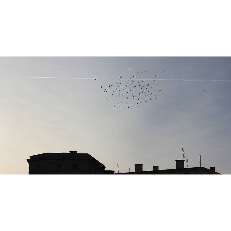 birds  #wałbrzych #poland #birds #sky #blue #2013 #tbt #śródmieście #buildings #roof #plane #freedom #minimalism #instaart #photoofthatday #fly #calm