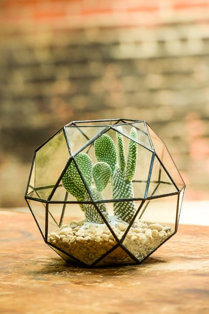 """Young Opuntia Cactus in Geometric Dome. Contained Wilderness for home or office.   Total Dimensions: 8""""x8"""" Pea Gravel Accent Guaranteed fresh by IFD  Delivery NYC & Nationwide"""