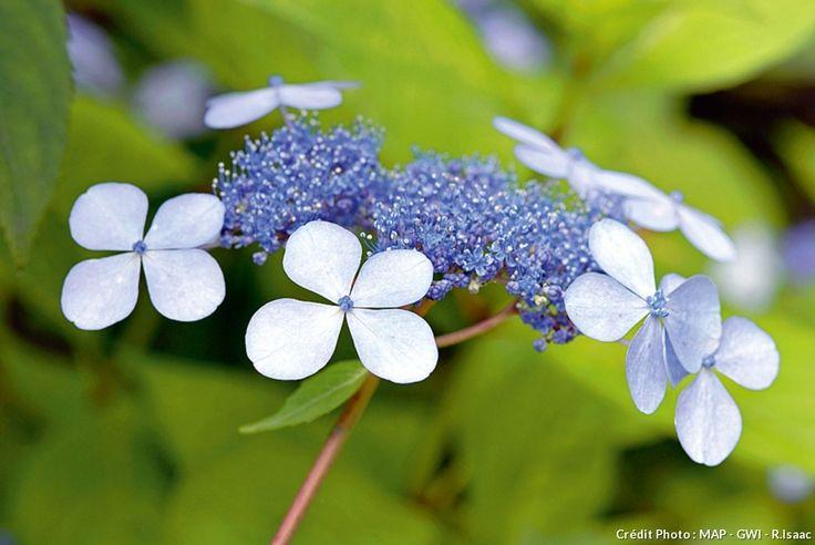 5317 best le jardin se partage images on pinterest for Tous les plantes