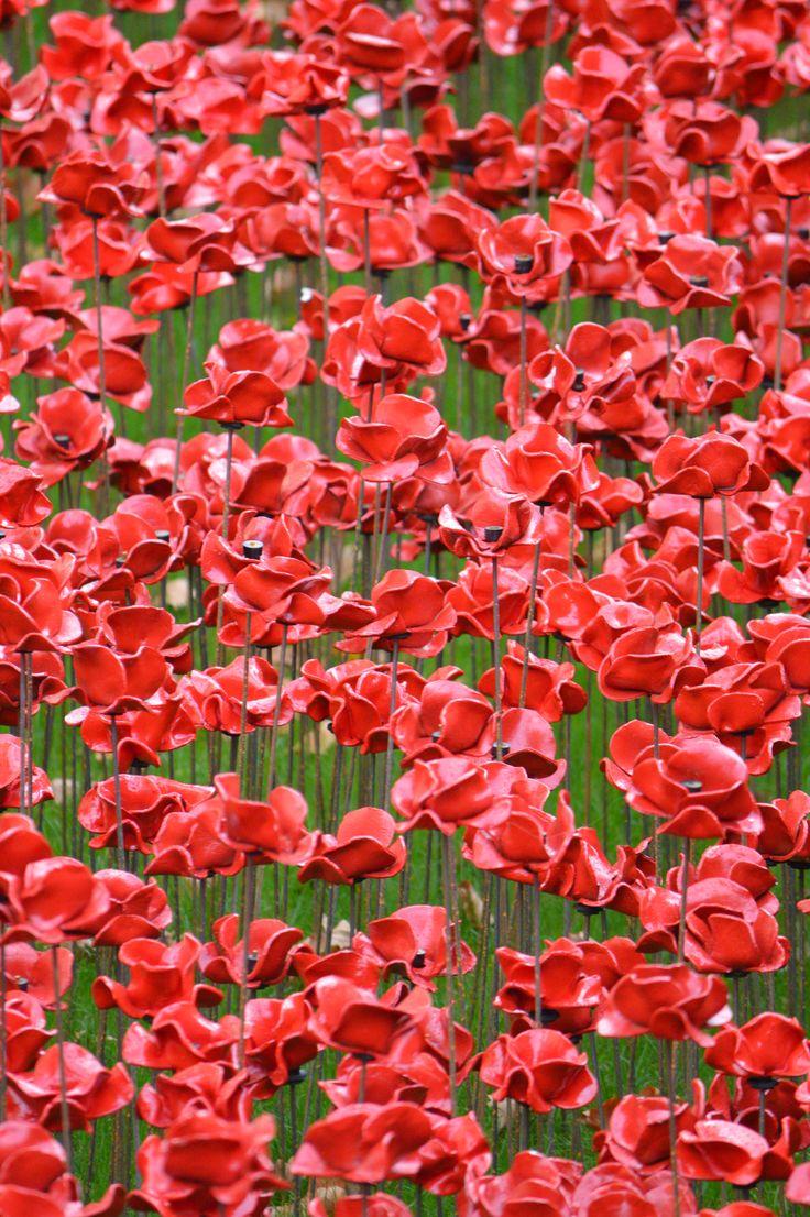 The best images about florals on pinterest designers guild