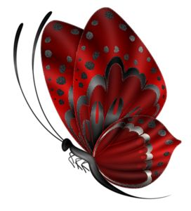 BUTTERFLY More