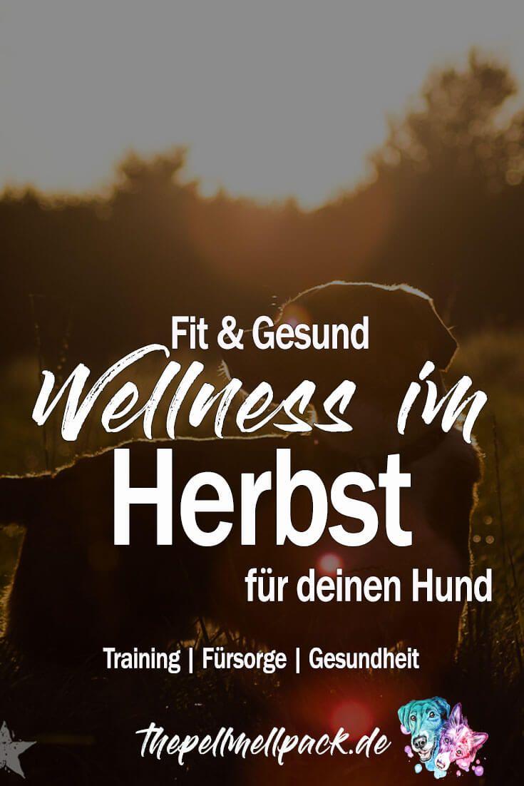 Dein Hund im Herbst – Wellness und Abenteuer, so sieht ein perfekter Herbsttag aus | Hund | Gesundheit | Ernährung | Herbst | Pflege | thepellmellpack.de