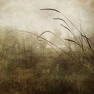 """""""Autumn"""" by Sarah Jarrett"""