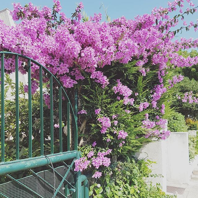 Mediterranean greenery: summerish colours that make me feel at home🌺 #southitaly #holiday #jungalow