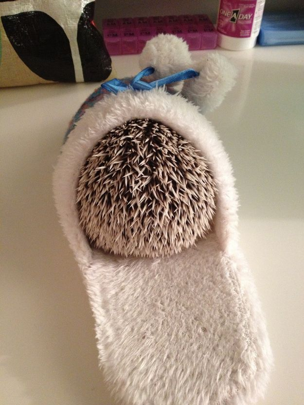 So you try to GET AWAY FROM IT ALL and hide | Community Post: 25 Hedgehogs Trying To Escape Their Identity