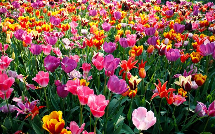 Ayer comenzó la primavera y con ella todos los preparativos y últimos detalles Oleaje...