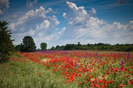 Poppy Fields of Romania Photo by Nora de Angelli - www.noraphotos.com -- National Geographic Your Shot