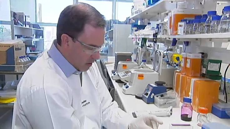 An study led by Dr Glen Boyle, from the QIMR Berghofer  in Brisbane, found a compound in the Blush berry could kill head and neck tumors, & melanomas.