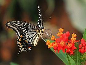 Kelebek ve çiçekler Video
