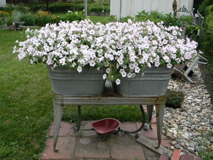Vista Silverberry petunia plant in each of the double washtubs.