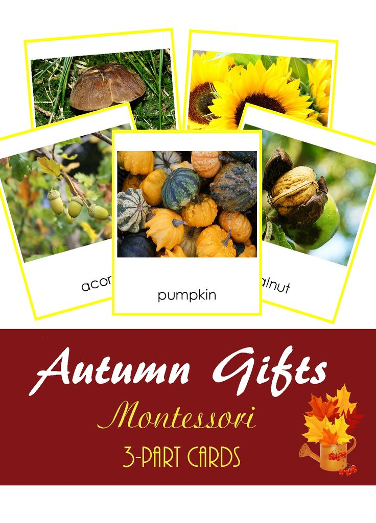 Autumn Gifts Montessori 3-part cards learning printable material