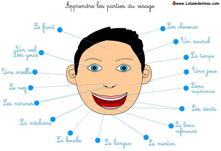 les parties du visage
