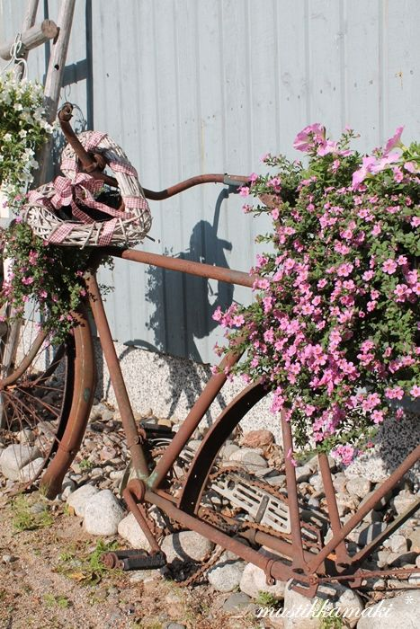 Old bicycle's days of touring are over, now it's repurposed as a home for beautiful flowers~❥