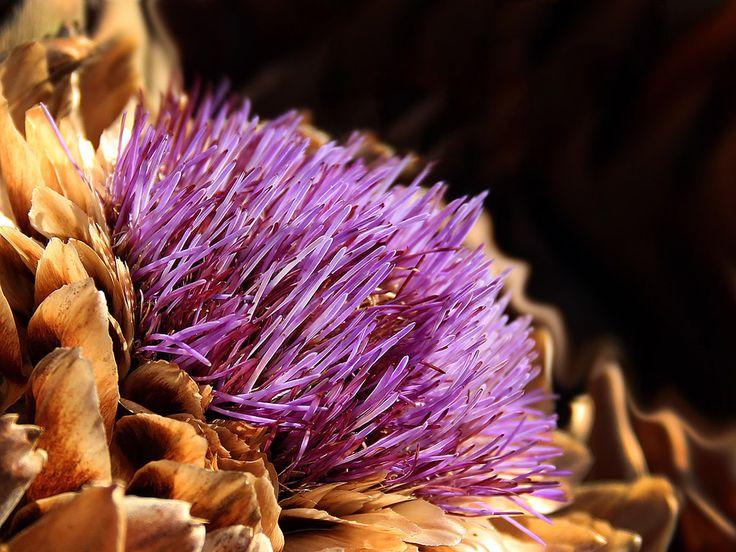 Artischockenblüte - kostenloses Hintergrundbild. Grössen: 1400x1050 und 1024x768 px