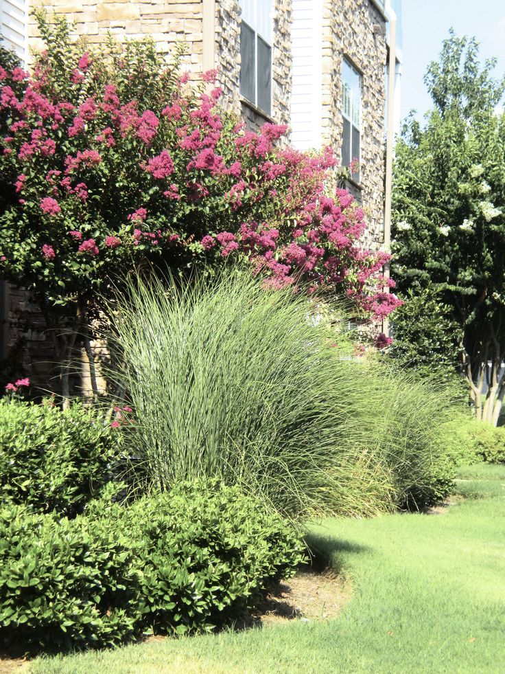 104 best landscaping ideas images on pinterest garden for Landscaping ideas with pampas grass