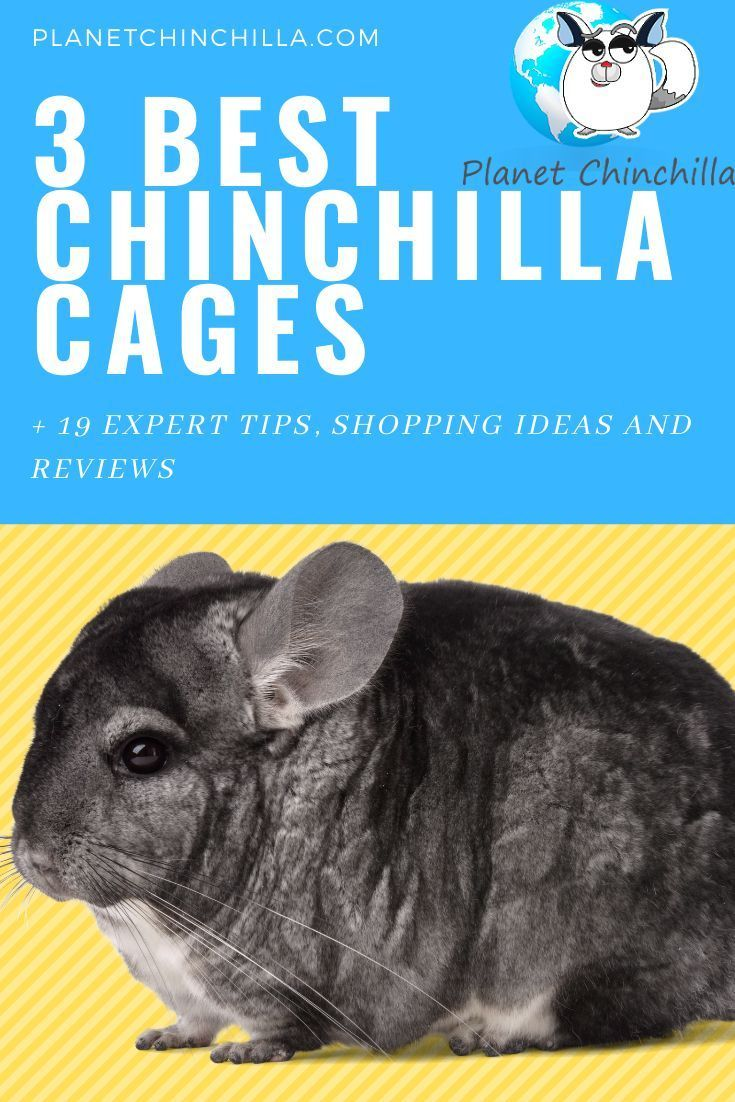 Learn About The Best Chinchilla Cages You Can Select For Your New