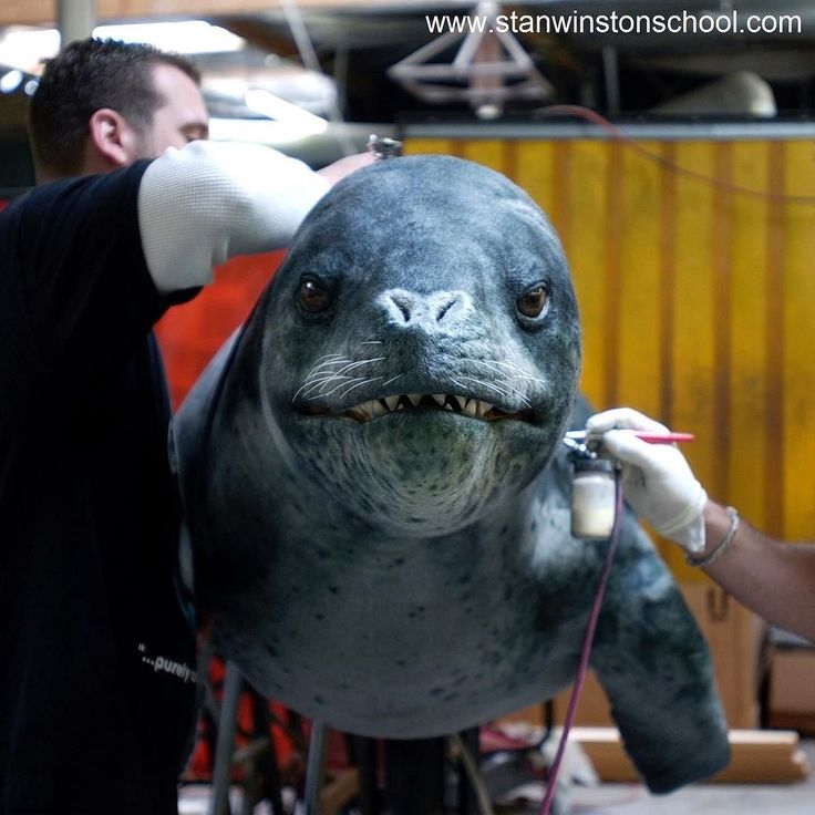 Say cheese! @jsgfxjamie and #markjurinko #paint the final #leopard #seal #puppet for Eight Below (2006) at #stanwinstonstudio. #digitalartists gave the puppets #skin a more #realistic sheen in #postproduction. #bts #behindthescenes #instagood #daily #photo #moviemaking #movie #sfx #fx #practicaleffects #visualeffects #specialeffects #filmmaking #filmindustry #best #animal #animals #hunter