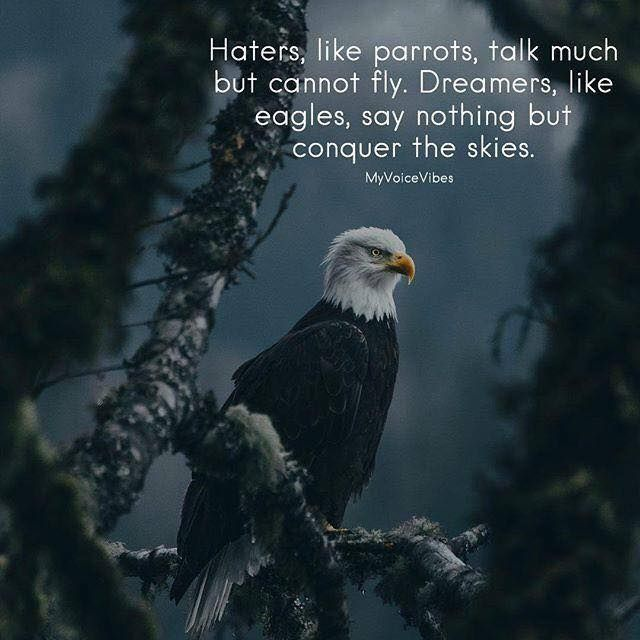 Haters like parrots talk much but cannot fly. Dreamers like eagles say nothing but conquer the skies.