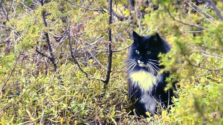 Cats in Norway photographed by Mitsuaki Iwago