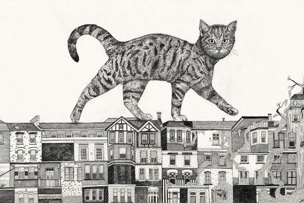 cats walking