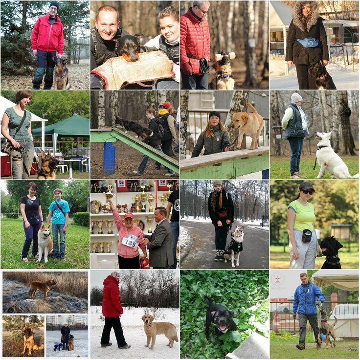 Общий курс дрессировки–Правила и нормативы собак, статьи, фотографии