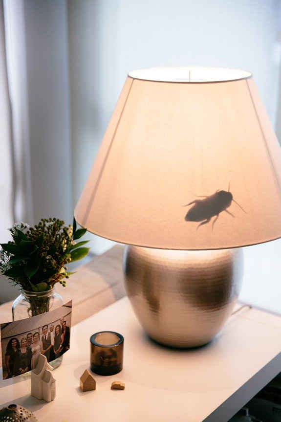 Make your roommate believe that your apartment has suddenly become infested with giant bugs.