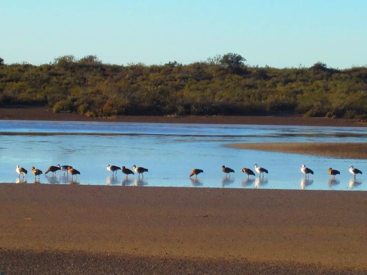 Puerto Madryn, wildlife on Peninsula Valdés