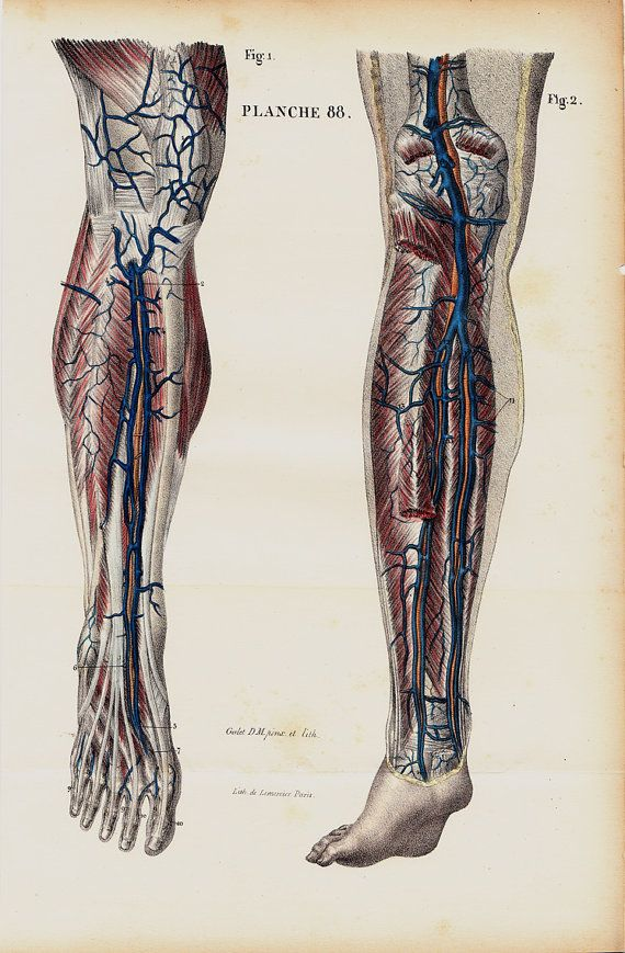 Anatomia antichi 1844 stampare da Lemercier, litografia bene anatomia della gamba e piedi muscoli e arterie