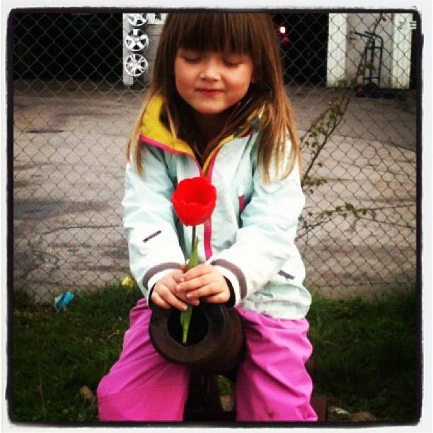 Tulips, make love not war