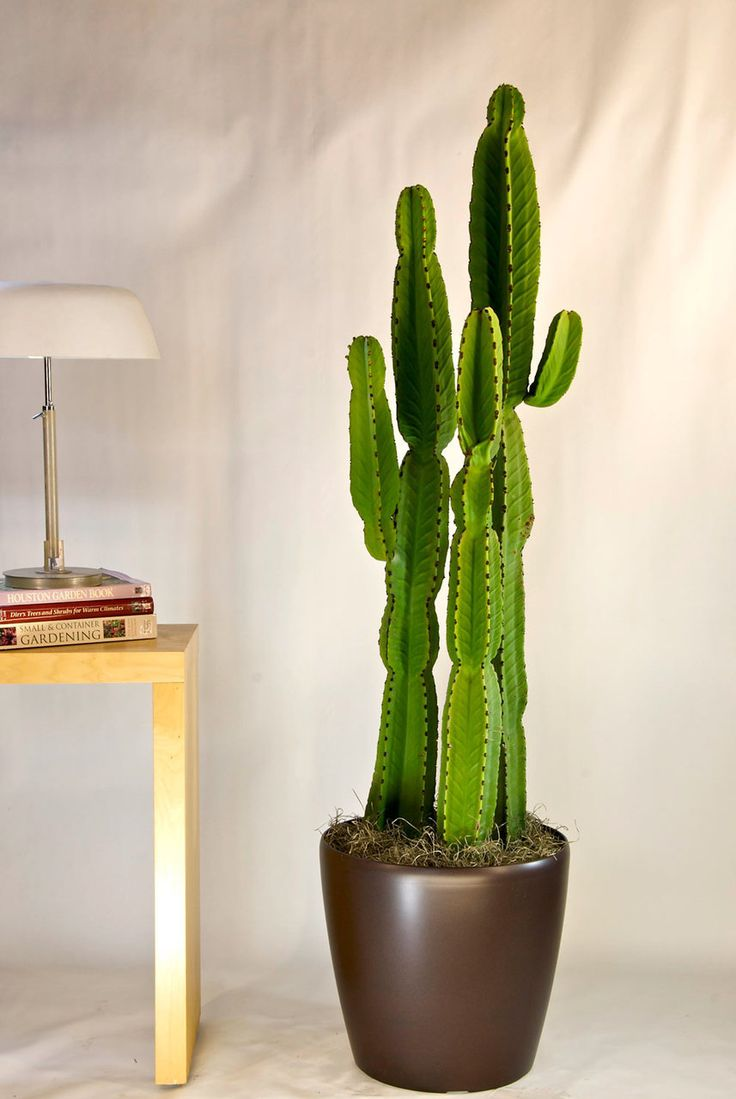 Best 25 indoor cactus plants ideas on pinterest indoor cactus cactus plants and green plants - Home plants types ...