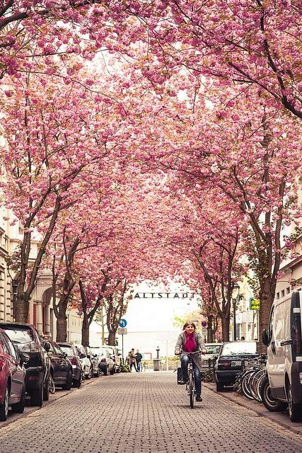 Darum lieben wir den Frühling #kirschblüte #spring