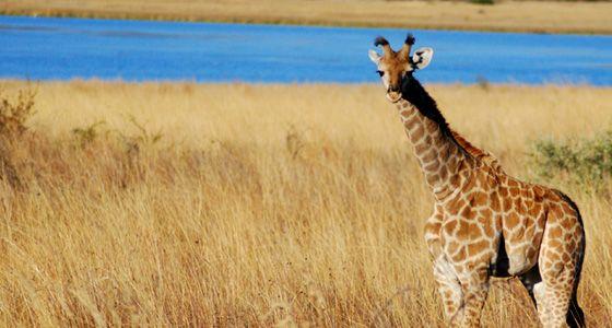 Pilanesberg_Game_Reserve_04.jpg (560×300)