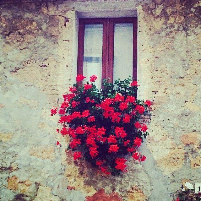#finestra #fiorita in un vicolo di #pienza in #valdorcia #toscana #tuscany #ig_italy #igtuscany #igtoscana #igerstoscana #igersitaly #italy #igerstuscany