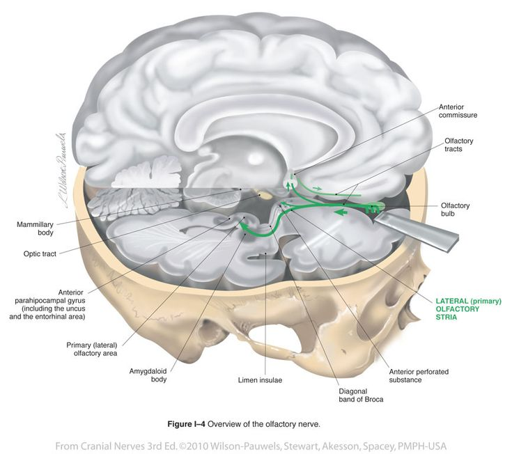128 Best Images About Neurology