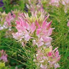 Flowers Hummingbirds like