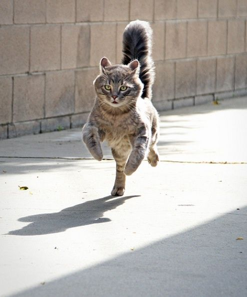 Freddy just remembered where he left his cat nip stash. He's got to get home to hide it before his room mates find it.