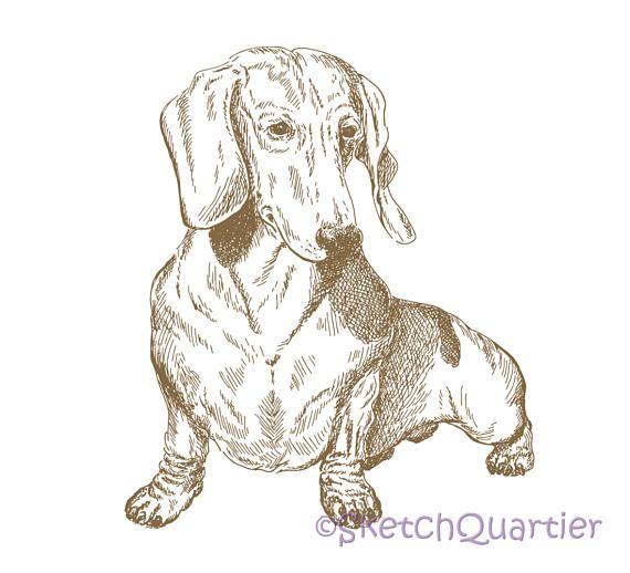 Dachshund Hand Painted Sketch vector clipart SVG EPS PNG for
