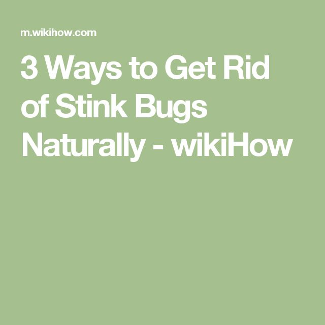 How To Get Rid Of Stink Bugs Naturally
