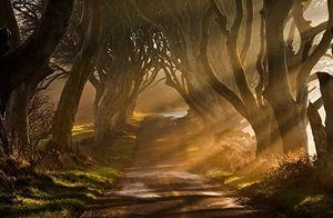 természet, táj, Köd, napsugarak, út, fák, fű, bokrok, napkelte, Írország