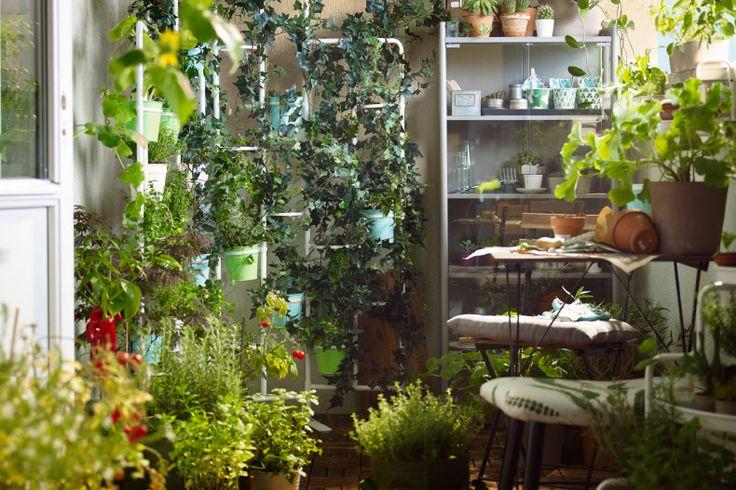 balcon rempli de plantes vertes herbes aromatiques cache. Black Bedroom Furniture Sets. Home Design Ideas