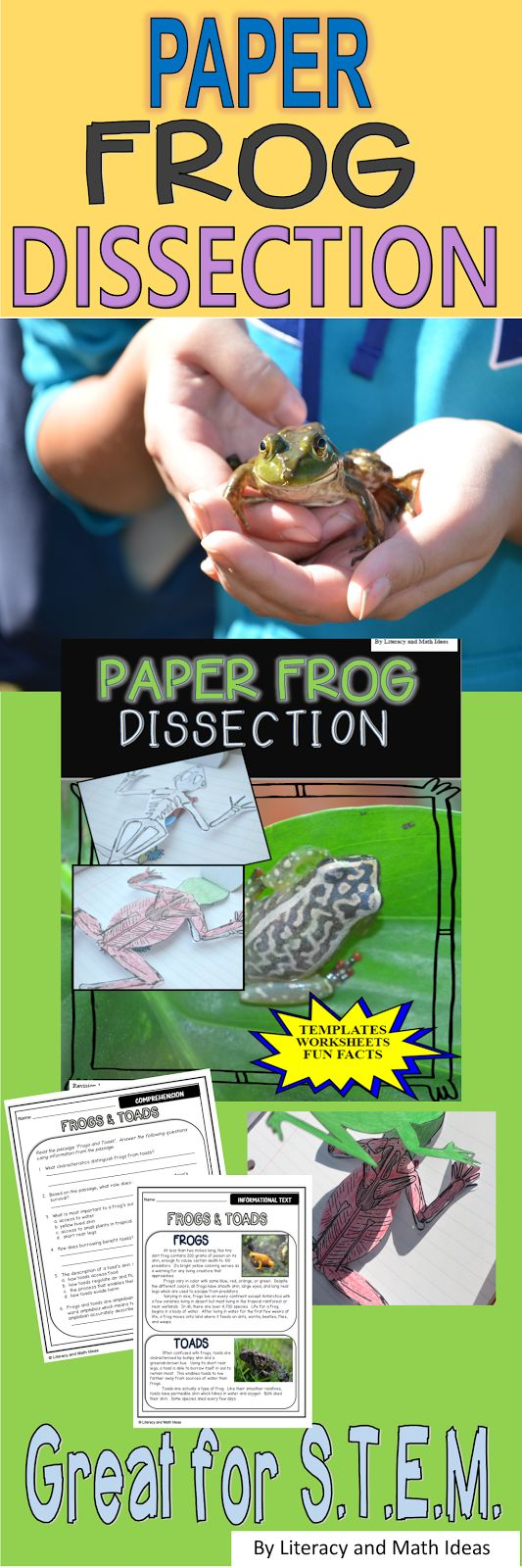 best 25 facts about frogs ideas on pinterest fun facts about