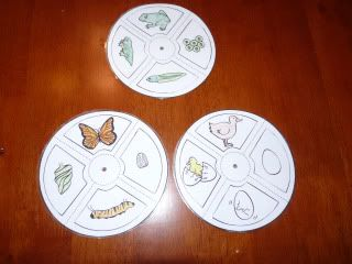 Life Cycle Activities (includes butterfly, frog, and duck); The patterns are found @ http://www.kizclub.com/craft/lifecycle.pdf