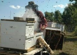 How to make your own Bee Smoker