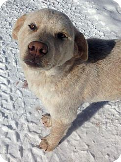 Dog Adoption Colorado Springs Co