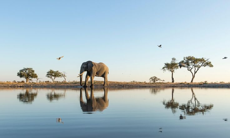 An elephants' watering hole in Chobe national park.